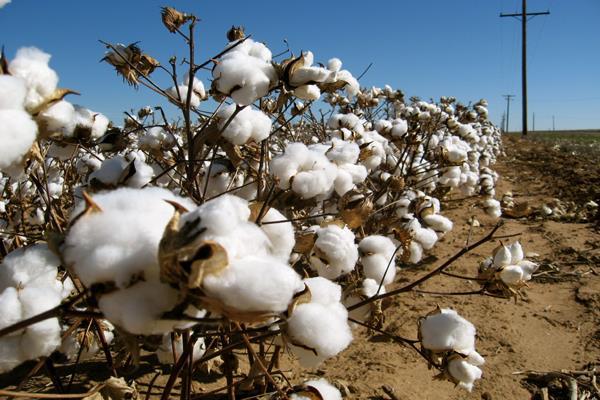 cotton assumes recession stockists suffer economic blow