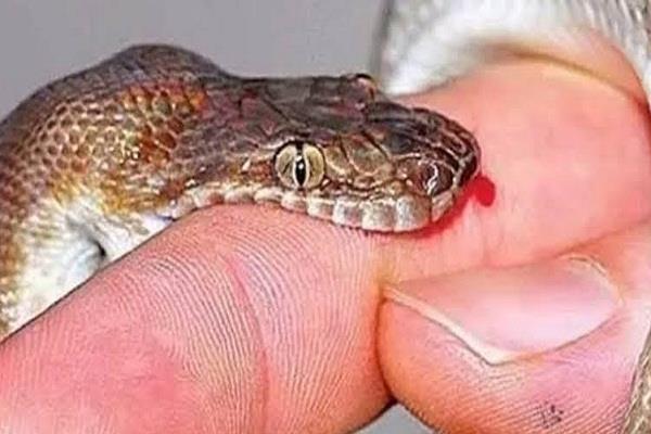 child dies to snake bite reprimanding doctor family which era living