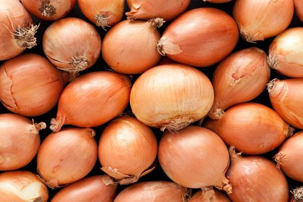 central government s big decision on onion prices rising ban on exports