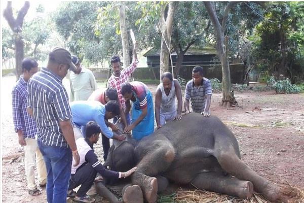 virus spreads in nandankanan zoo 4 elephants killed