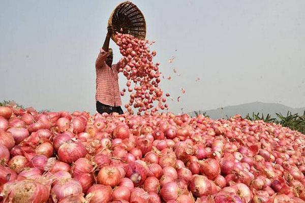 government considering the price of onion the stock limit of rs 80