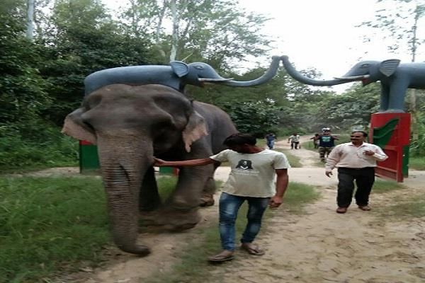 hathini brought to forest santoor elephant rehabilitation center from delhi
