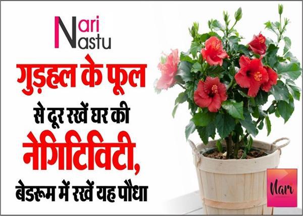 बरकत और तरक्की के लिए घर में रखें यह पौधा, जानिए औरतों के लिए शुभ पौधे?