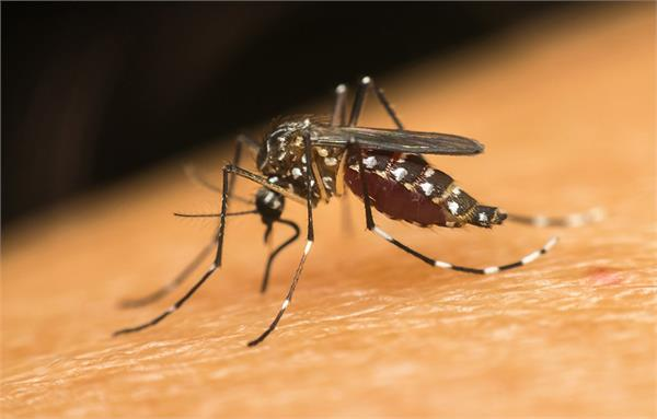 anemia may contribute to the spread of dengue fever