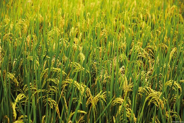 this year kharif crop production will be more than 14 crore 17 1 lakh tons