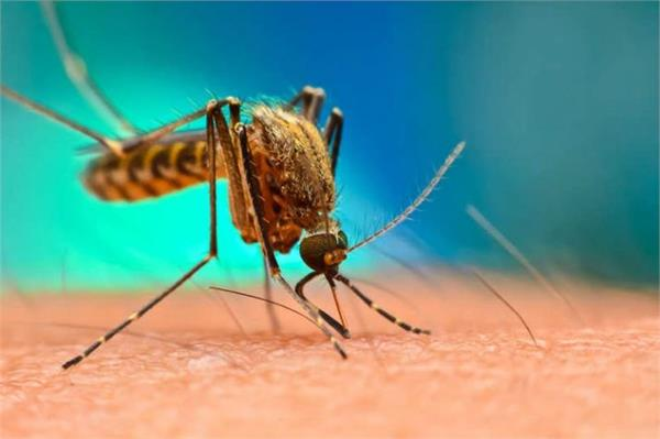 jhansi administration tightens its back to deal with dengue
