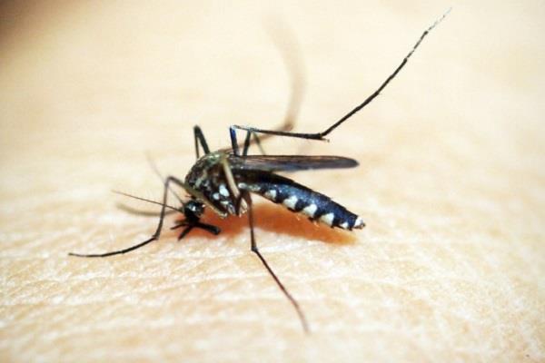 250 cases of malaria were reported in delhi