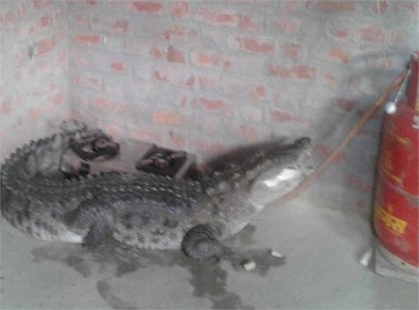 crocodile was sitting near the cylinder in the kitc