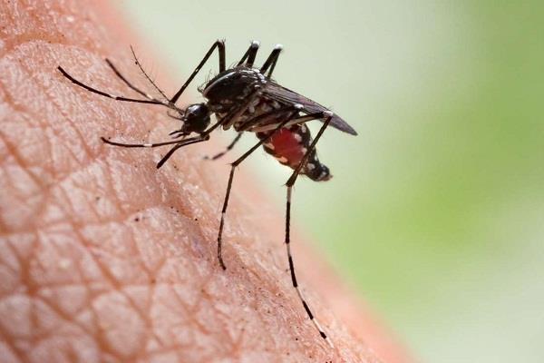 according to the report india ranked fourth in the world in malaria cases
