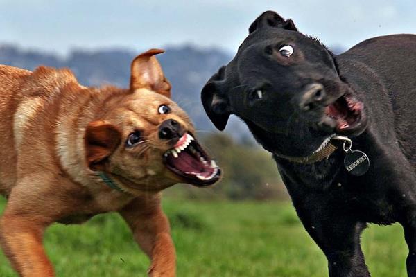 nadaun mad dog panic