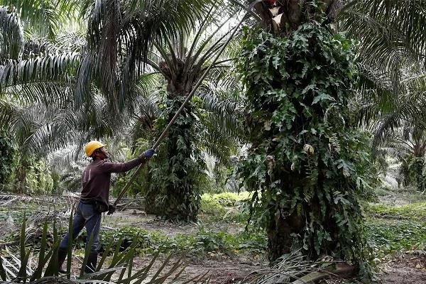 government imposes five percent security duty on palm oil imports from malaysia