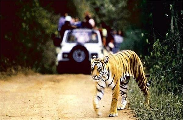 dudhwa tiger reserve will open from november 1 these rules followed