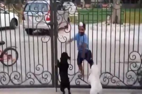 a little boy do bhangra front of dogs