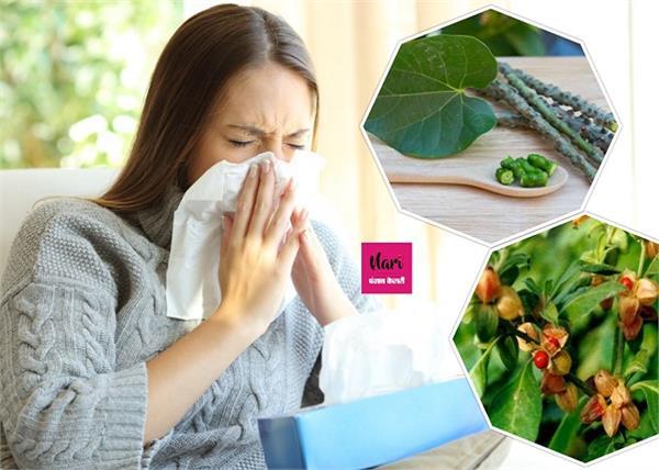 Health Advice: कोरोना काल में अमृत समान ये 4 औषधियां, खा लीं तो नहीं कोई खतरा