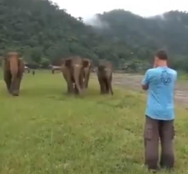 elephants expressed love after seeing former caretaker