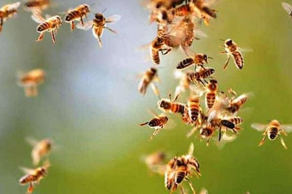 9 girls went to the banquet in the grip of bees suffering from sting