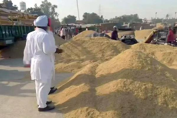 government has purchased eight lakh tonnes of paddy at msp