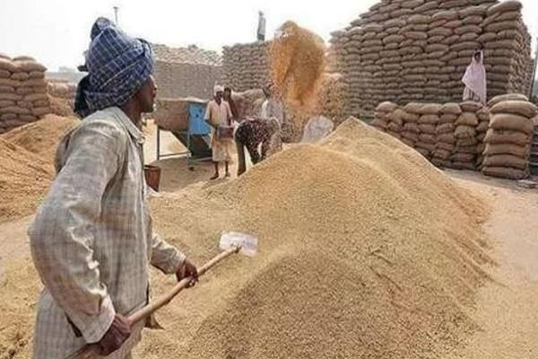 government paddy purchase increases by 28 5 percent