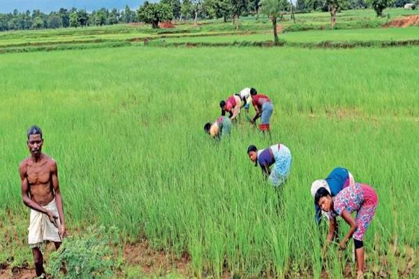agriculture sector raises expectations 43 4 percent september quarter