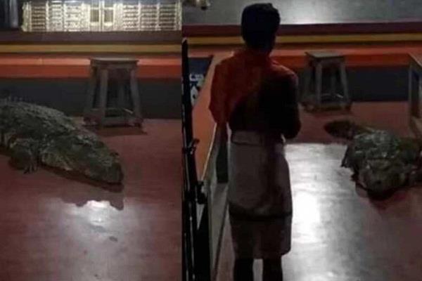 social media kerala anantapur temple crocodile