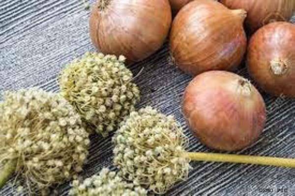national seeds corporation is unable to provide onion seeds