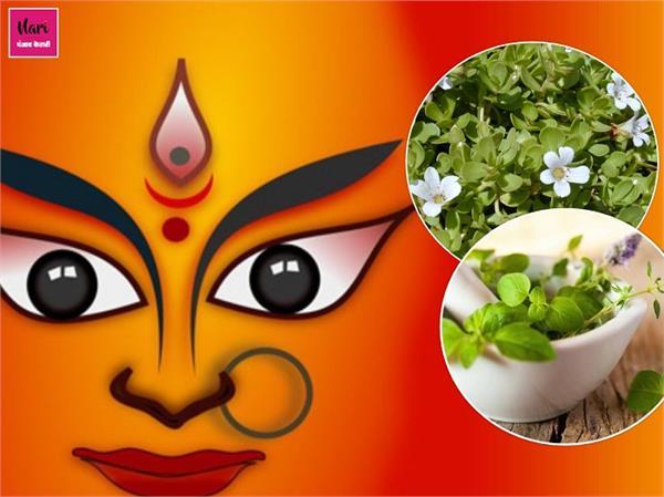 नवरात्रि का आयुर्वेद में गहरा संबंध, मां दुर्गा का स्वरूप है ये 9 औषधियां