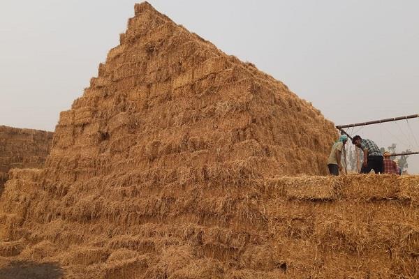 biomass power plants in kurukshetra will generate crores