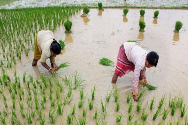 1 40 crores will be spent for paddy purchase during kharif season