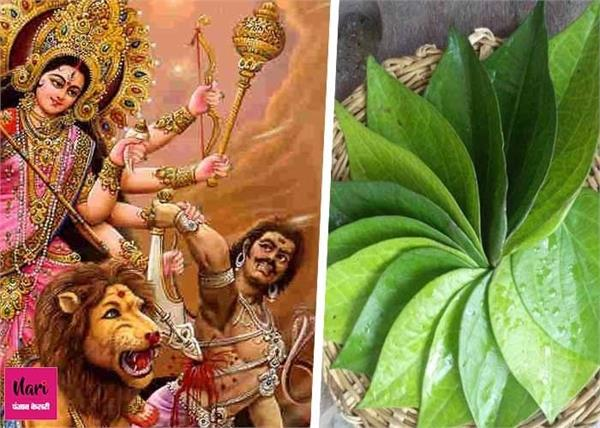 नवरात्रि के दिनों में पान पत्तों से जुड़े ये उपाय जरूर करें, घर में बनी रहेगी बरकत