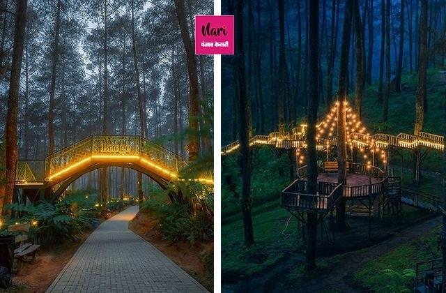 दिल जीत लेगा पेड़ों पर पीली रोशनी में जगमगाता यह पुल, देखिए तस्वीरें