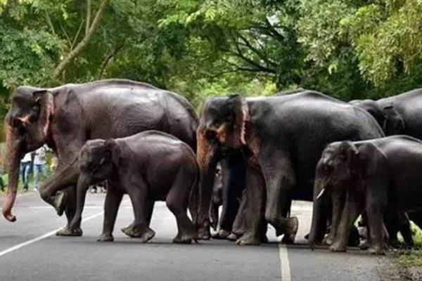 campaign to install elephants  radio collar