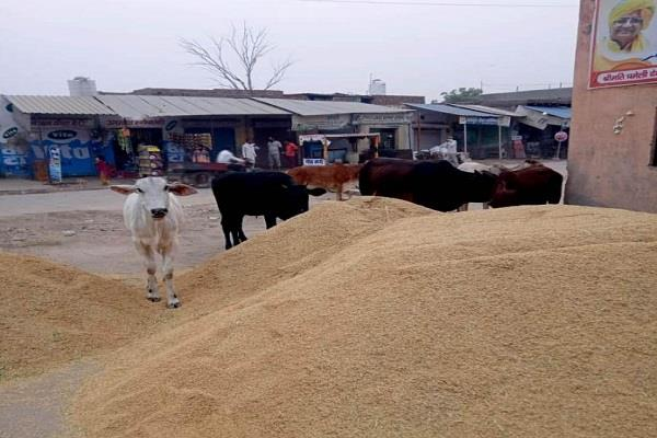 arrangement for security of farmers and crops in the grain market