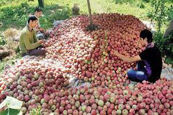 kashmir s apple growers happy with farm law