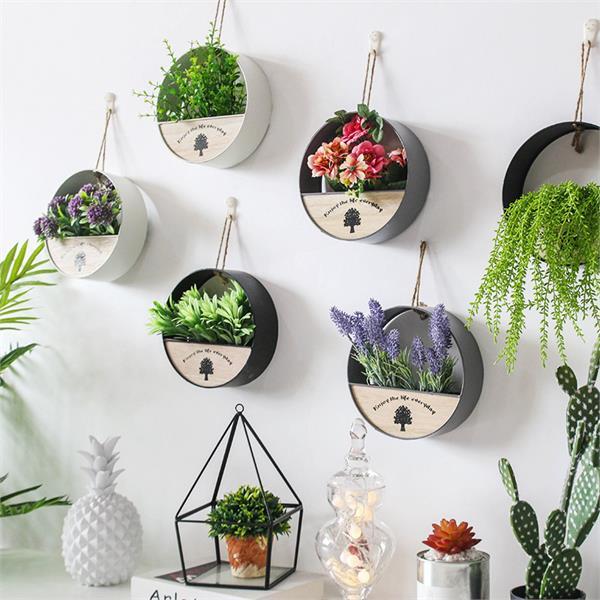 दीवारों की रौनक बढ़ाएंगे ये Hanging Plants, हर समय ताजगी और मिलेगी पॉजिटविटी