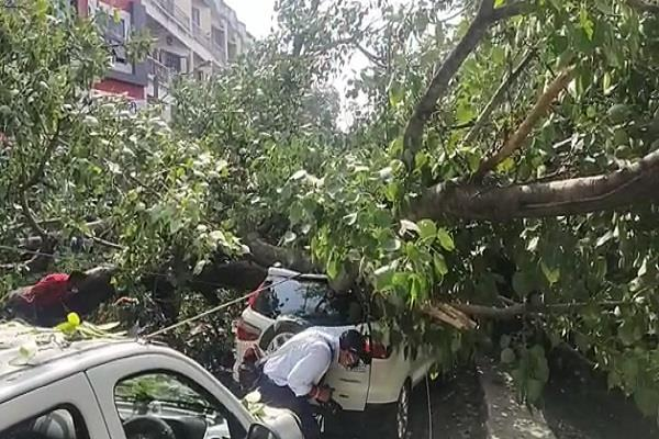 more than 100 years old peepal tree fell in indore