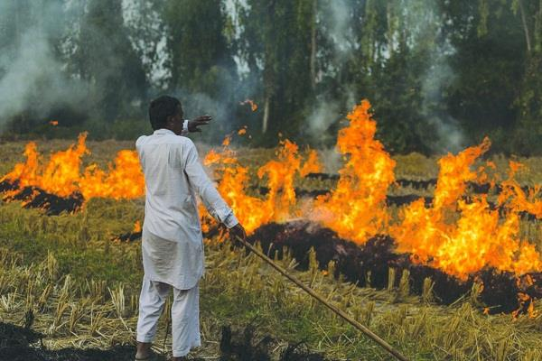 sc appoints retired judge to supervise stubble burning in punjab haryana and up