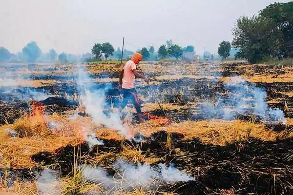 premature harvesting of crops laborers due to corona caused pollution