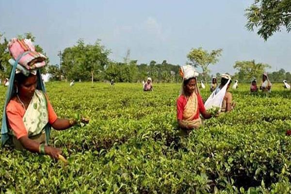 tea exporters feared a decrease exports this year