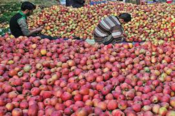 cabinet approves purchase of 1 2 million tonnes of apples in jammu and kashmir