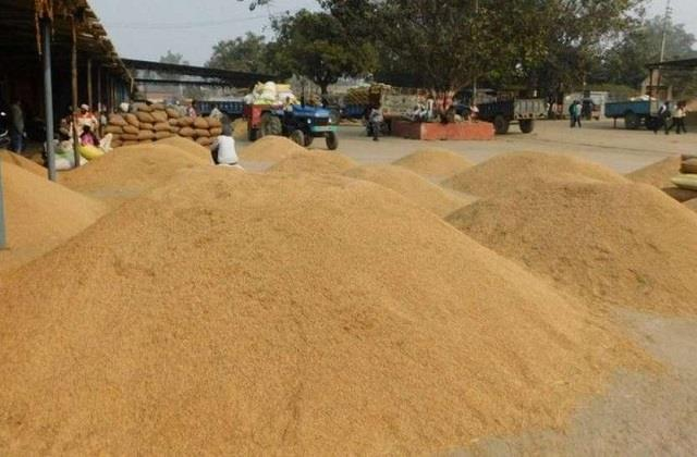 government procurement of paddy in punjab crosses 142 lakh