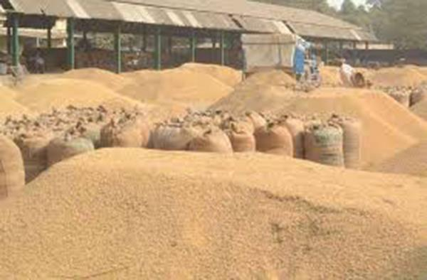 paddy purchase in country