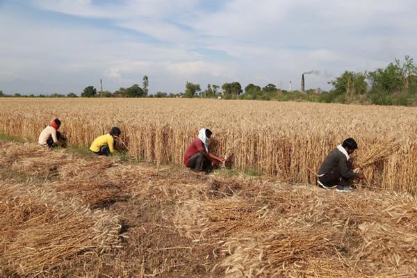 crop centre in jammu kashmir