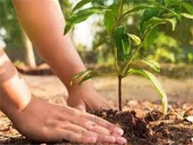emphasis placed on planting more trees