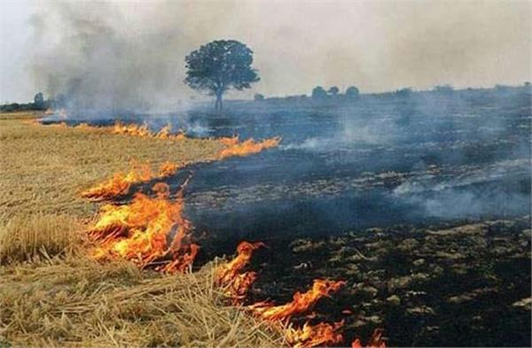 stubble burning highest number of cases in sangrur