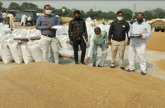 government is not buying paddy in sohna grain market