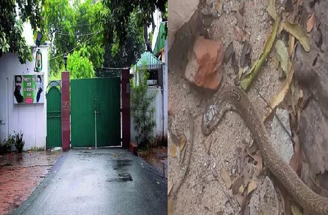 politics started with killing of snake in lalu rabri house