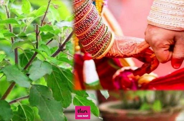 Tulsi Vivah 2020: पति-पत्नी में नहीं बनती तो तुलसी विवाह पर करें ये काम