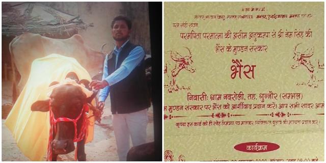 farmer mundan sanskar of buffalo gave feast to 500 people