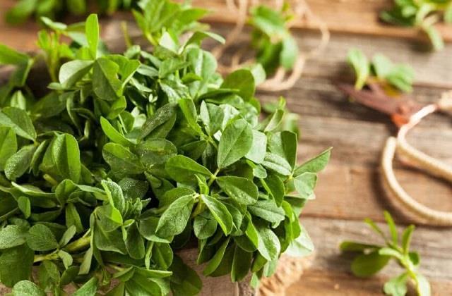Winter Gardening: घर पर कैसे उगाएं औषधीय गुणों से भरपूर मेथी