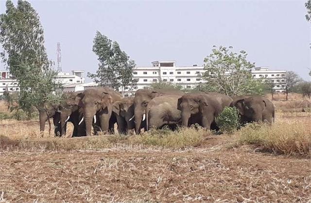 9 year old girl badly crushed by a herd of wild elephants